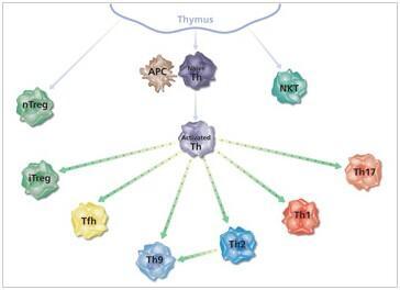 促炎细胞因子有哪些