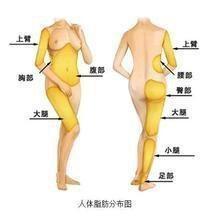 人变瘦的原理_了解了脂肪肝的原理