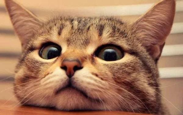 《猫》(郑振铎)的主要内容、中心思想