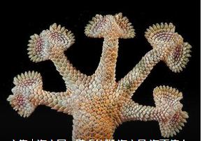 壁虎脚趾启示下发明了什么?