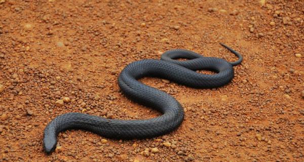 世界上最可爱蛇排名_世界上排名前10名毒蛇叫什么_百度知道