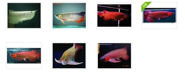 龙鱼分几种并详细说明有图片更好