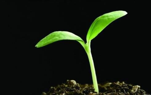 种子发芽需要什么条件?