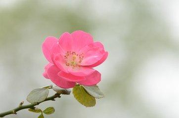 介绍一些花的名称以及开放时间?