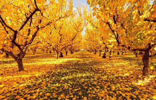 关于描写秋天的小诗_关于歌颂秋天的诗词 歌颂秋天美好景象的诗句有哪些