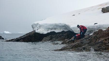 荒无人烟的南极洲?,也没能逃过塑料污染的魔爪
