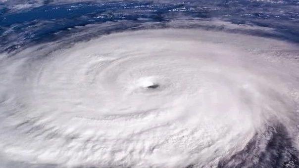 台风来了!动物们会被吹走吗?想不到它们的抵御招数竟然是…