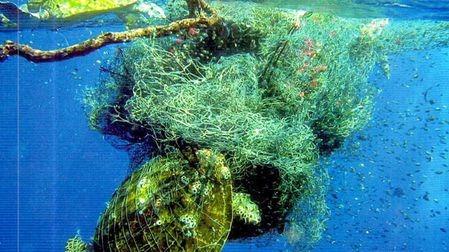 海洋未来是鱼和垃圾的争夺战?的头图