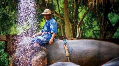 """揭秘大象旅游:象夫真的是残暴的""""恶魔""""吗?"""