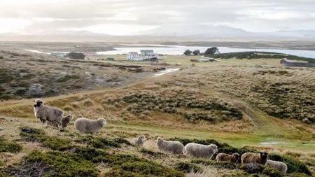 马岛战争阿根廷军队面对65万只羊却高喊没饭吃而投降?