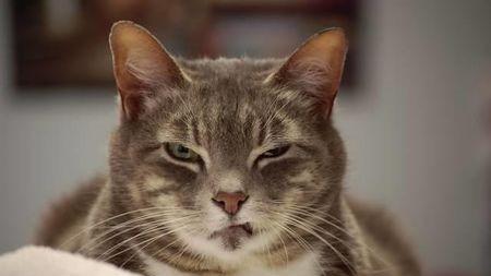 为什么有人觉得猫特别恐怖?的头图
