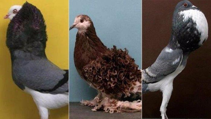 鸽子为啥成为和平的象征,原来是这么回事!