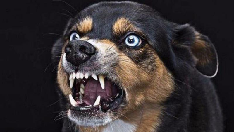 如果人患上狂犬病会怎样?