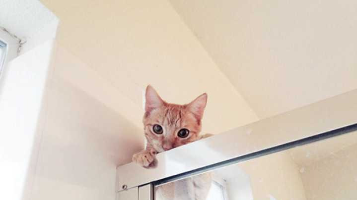 猫咪为啥总爱看人上厕所,留点隐私行不行?