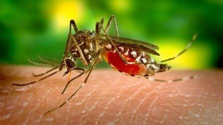 为了灭蚊,谷歌的兄弟公司打算释放2000万只蚊子