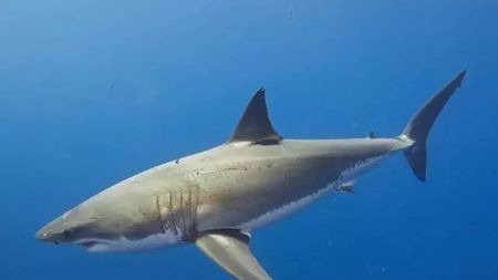 作为恐怖电影里的常客,大白鲨其实并没那么恐怖!