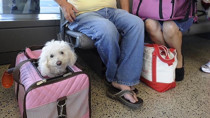 人坐飞机,宠物应该随机托运吗?