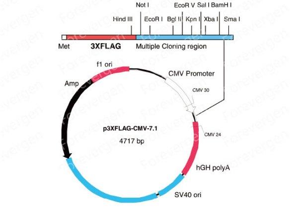 分子克隆技术的原理_分子克隆技术图片