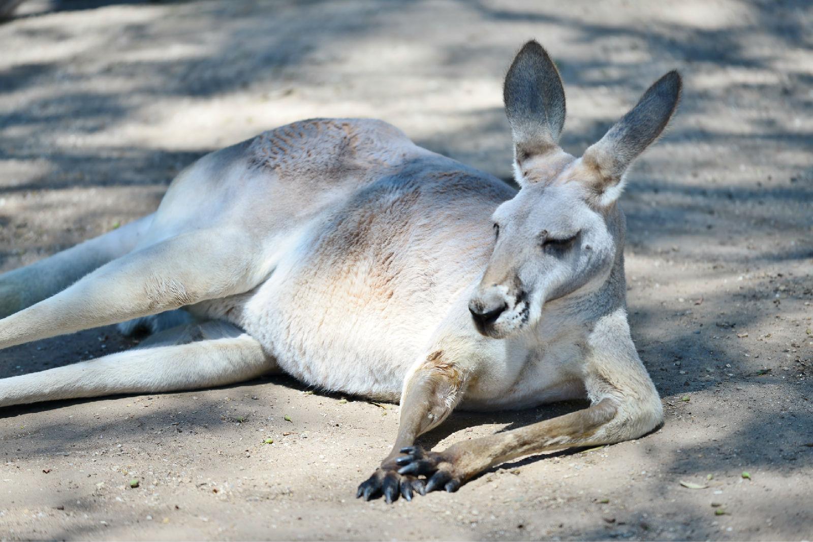 澳大利亚旅游攻略图片51