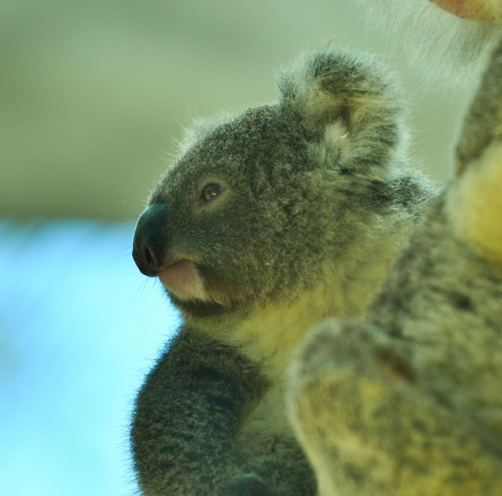 澳大利亚旅游攻略图片43