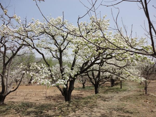 天津蓟县旅游攻略图片37