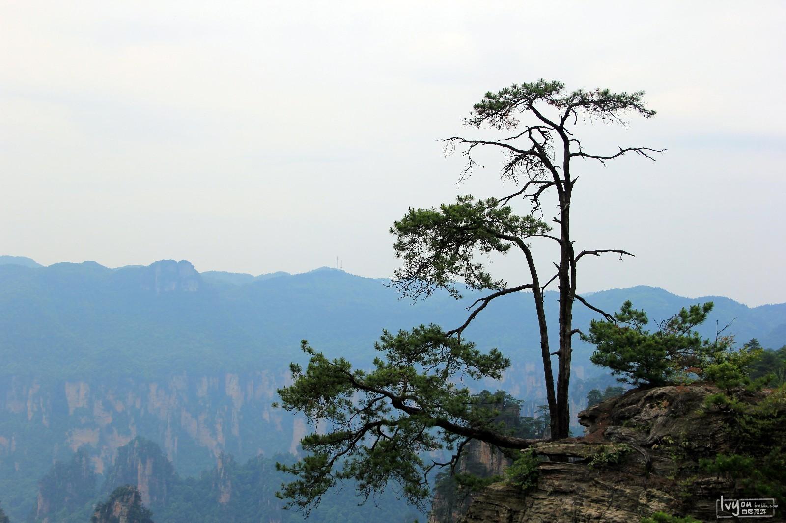张家界国家森林公园旅游攻略图片10