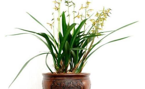 兰草怎么养_兰花的养殖方法和注意事项,兰花怎么养最好_百度知道
