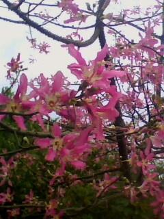 这是什么树?树干有刺,花期在国庆节,花是红色