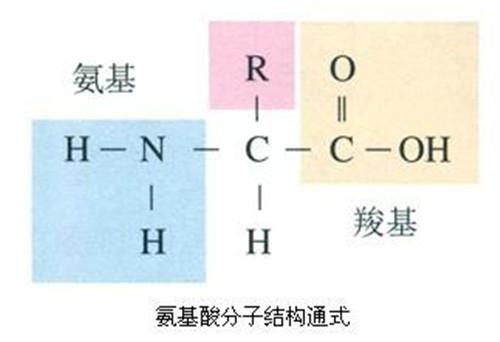 d丙氨酸和l丙氨酸的区别_氨基酸的两种构型D型和L型该如和区别?_百度知道