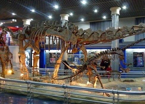 陕西自然博物馆门票_北京自然博物馆 预约_百度知道