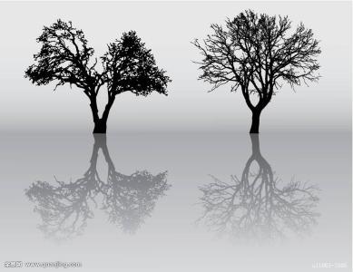香樟树叶子的资料_冬天不掉叶子的树有哪些_百度知道