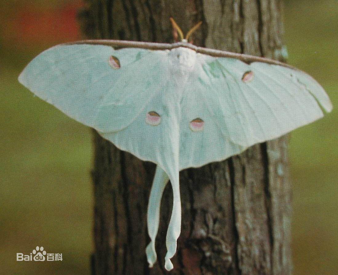 蝴蝶和蛾子属于什么目