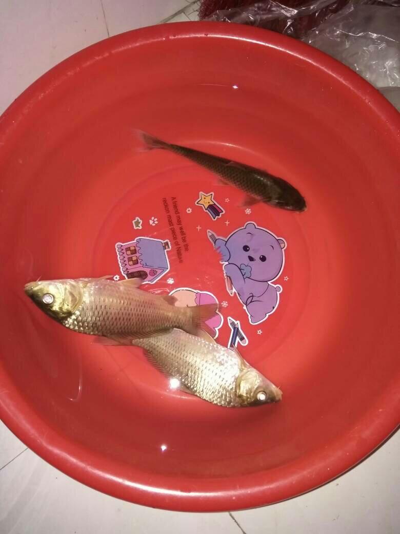 梦见自己钓的鱼死了 梦见鱼死了是什么征兆