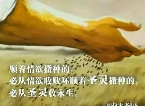 """Image result for """"教养孩童,使他走当行的道,就是到老他也不偏离。""""(箴22:6)"""