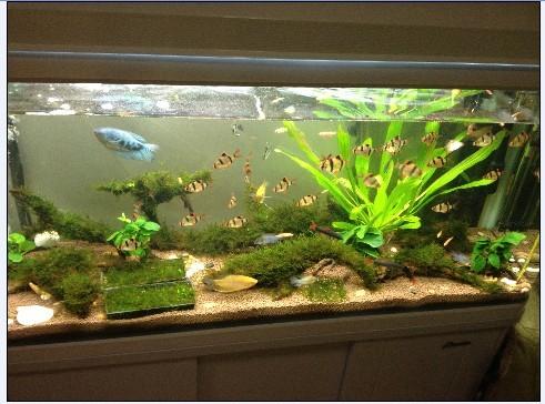 鱼缸如何养冷水鱼_鱼缸能养什么虾_百度知道