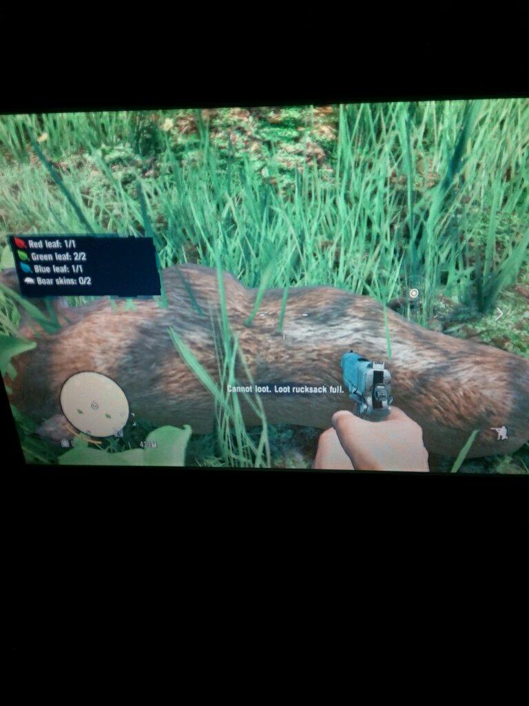梦见杀死野猪什么预兆 梦见杀死一头野猪