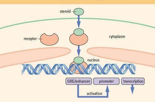 下列关于rna生物合成