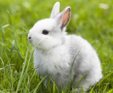 描写小狗的外形_关于小兔子外形的描写_百度知道