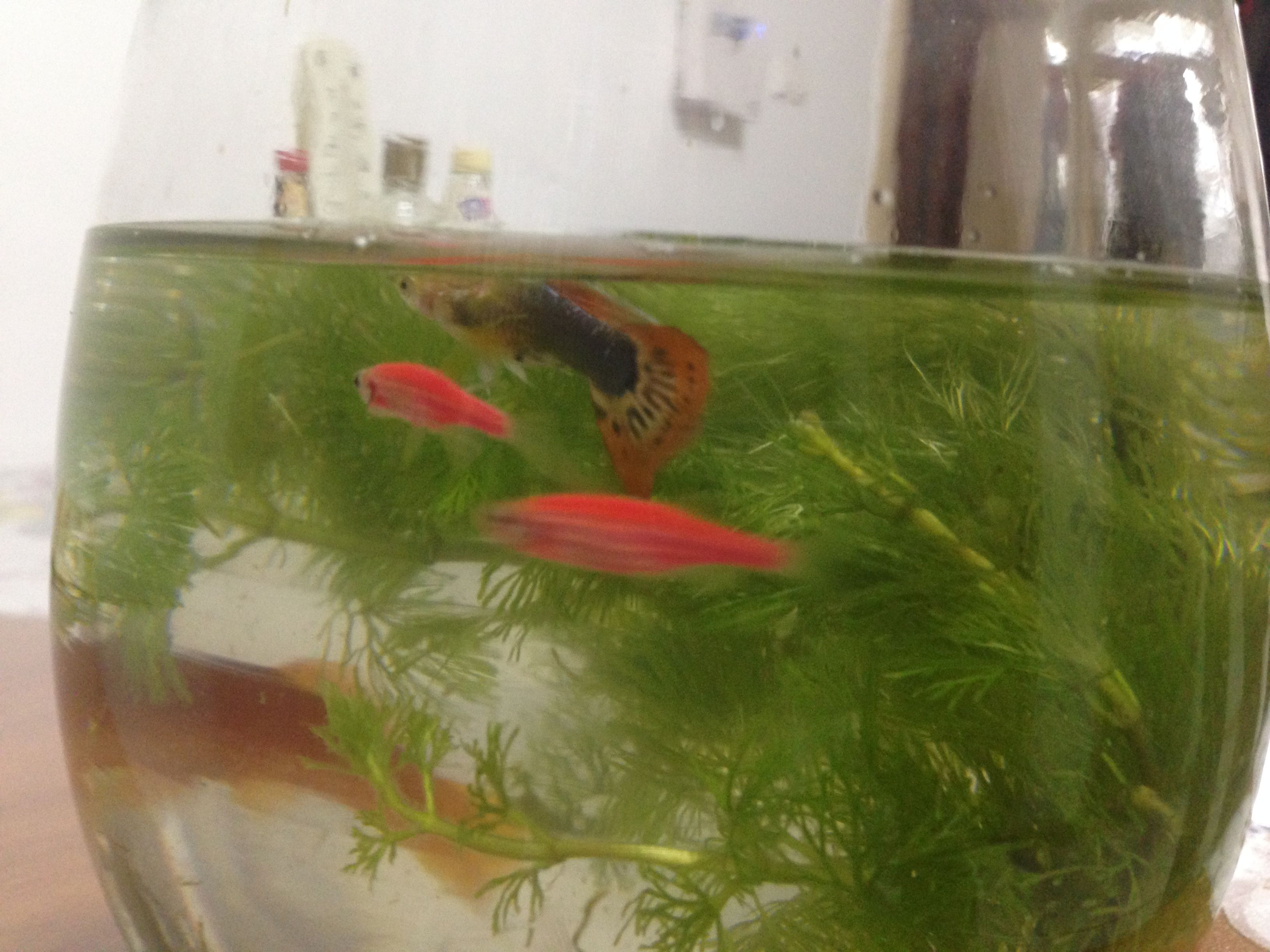 红斑马鱼好养吗_刚买的小型观赏鱼,求问种类和饲养方式_百度知道