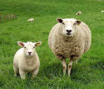 羊兔猪属相在一起合适吗