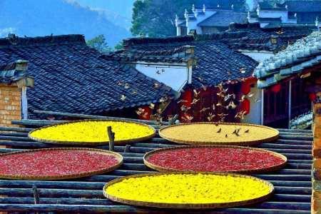 关于婺源油菜的诗词 婺源晒秋诗歌描述晒秋的诗文