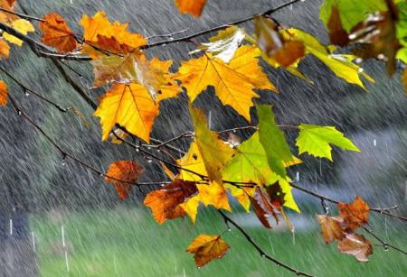七月关于南方下雨的诗词 描写南方夏天的诗句