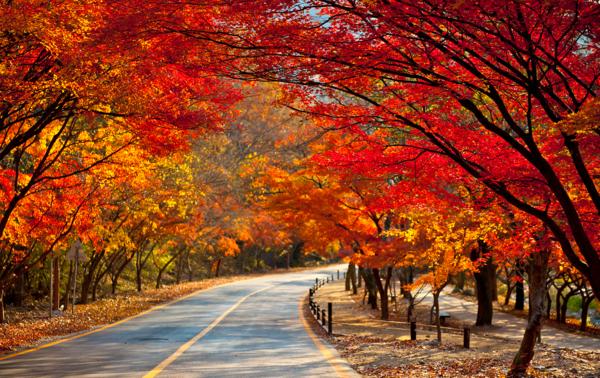 秋天有什么景物