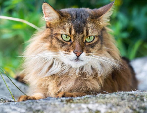 家里来了一只流浪猫,怎么赶都不走怎么办?