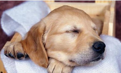 鼻子里冒热气_如何判断狗狗是不是发烧了呢?_百度知道