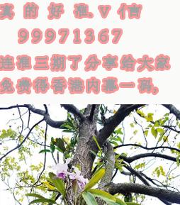 求2015财神报玄机图66期。加q1848731091