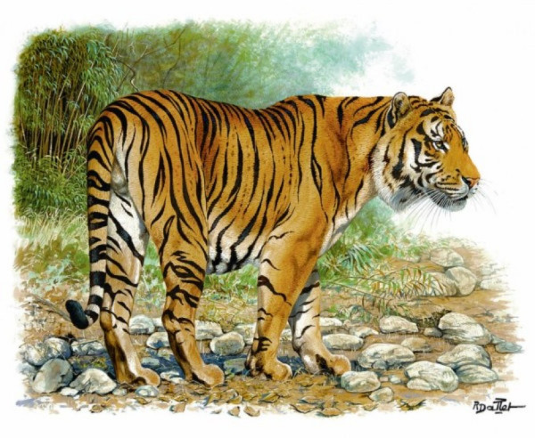 老虎是什么意思_扮猪吃老虎是什么意思?_百度知道