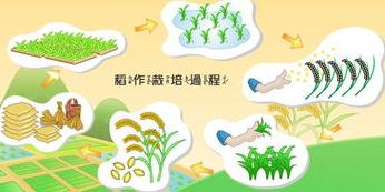 谁有水稻生长过程的图片