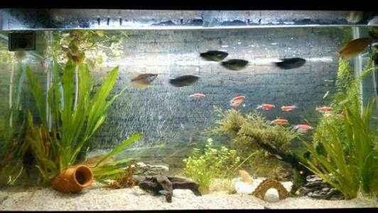 大点的鱼缸养什么样的鱼好看?