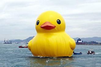 大黄鸭图片_大黄鸭是什么意思